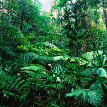 Tropical_Rainforest